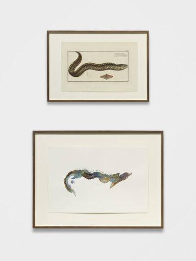 Anri Sala, 'Untitled (Gymnothorax Afer/Cuba)', 2018