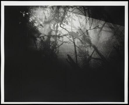 Erik Steffensen, 'Botanical Garden/Bronx Zoo XII', 2015