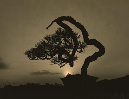 Yamamoto Masao, '#4016'
