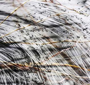 Luisa Libardi, 'Wires (Fios-Desfios) VI', 2020