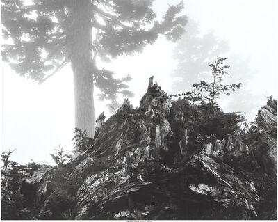 Ansel Adams, 'Tree, stump and mist, Northern Cascades, Washington', 1958