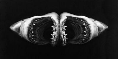 Robert Longo, 'Untitled (Double Shark)', 2010
