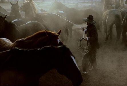 William Albert Allard, 'IL Buckaroo Ricky Morris Wrangling Horses, Nevada', 1979