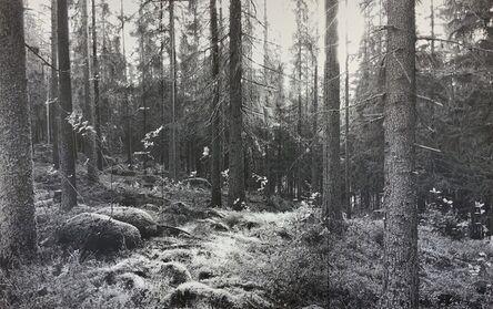 Yuichiro Sato, 'Forest', 2019-2020