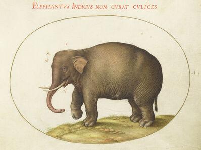 Joris Hoefnagel, 'Animalia Qvadrvpedia et Reptilia (Terra): Plate I', ca. 1575/1580