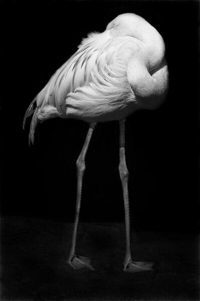 Elliot Ross, 'Animal (51)', 2008