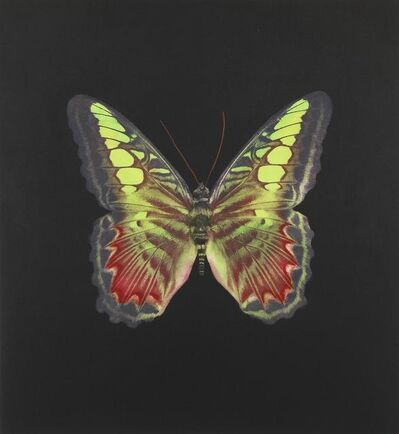 Damien Hirst, 'The Souls on Jacob's Ladder No.2', 2007