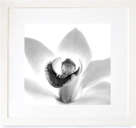 Iran Issa Khan, 'Orchid', 2000