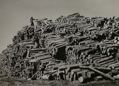 Margaret Bourke-White, 'Worker on Top of Pine Log Pile', 1939