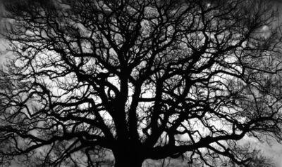 Robert Longo, 'Untitled (Tree)', 2018