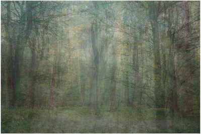 Amy Elkins, 'Seven Years out of a Death Row Sentence (Forest)', 2009-2016