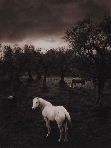 Pentti Sammallahti, 'Cilento, Italy (white horse)', 2000