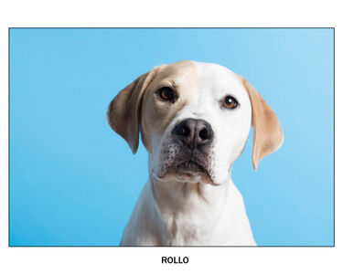 Dirk Westphal, 'Rollo', 2018