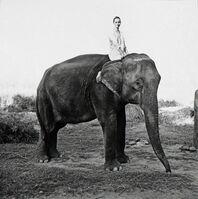 Arthur Elgort, 'Kate Moss on the Elephant, British Vogue', 1993