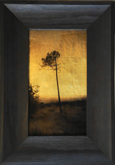 Kate Breakey, 'Tree South of France [Ref. #7]',  2014-2015