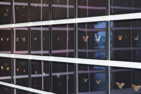 Maximilian Prüfer, 'Black Butterfly-Prints 72 pieces', 2019