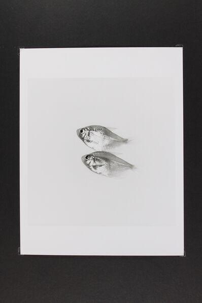 Phil-Hee Kong, 'Gold Fish', 2014