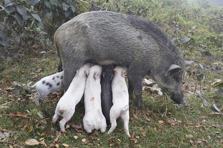 Juergen Teller, 'Wildschweinmutter, Kolkata, India 2014', 2014
