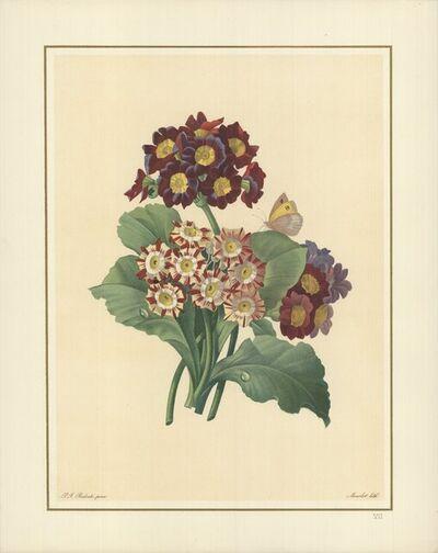 Pierre Joseph Redouté, 'Oreilles D'Ours- Primula auricula, varietes', 1939