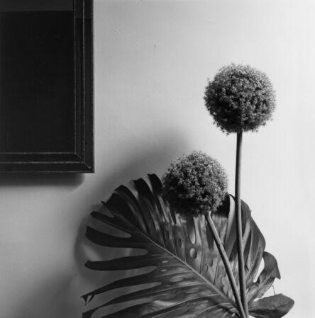 Robert Mapplethorpe, 'Flower', 1980