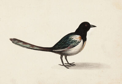 Master of the Arundel Sketchbook, 'A Magpie', ca. 1645