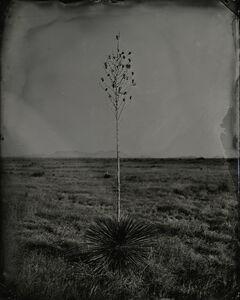 Keliy Anderson-Staley, 'Yucca', 2020