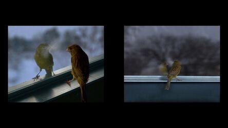 David Claerbout, 'Breathing Bird', 2012