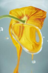 Sophie Delaporte, 'Flowers#18', 2020