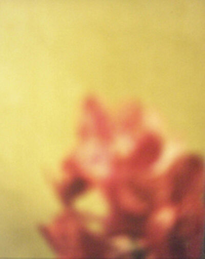 David Seidner, 'Orange Cluster on Green', 1999