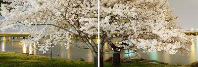 Frank Hallam Day, 'Cherry Blossom Diptych', 2012