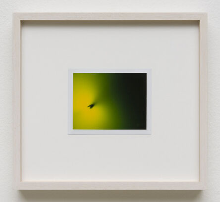 Peter Miller, 'Photuris #2', 2013