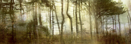 """Lisa Holden, 'Pine Forest (from Series """"Constructed Landscapes"""")', 2010/2011"""