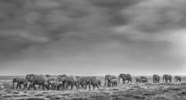 David Yarrow, 'We are Family', 2020