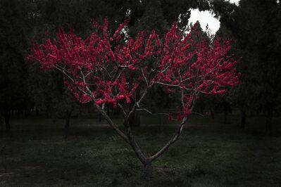Shen Wei 沈玮 (b. 1977), 'Plum Tree', 2014