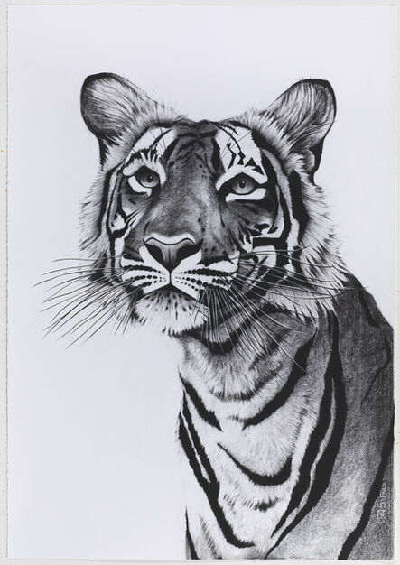 Rose Corcoran, 'Tiger Portrait Posing'