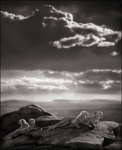 Nick Brandt, 'Cheetah & Cubs Lying on Rock, Serengeti', 1999