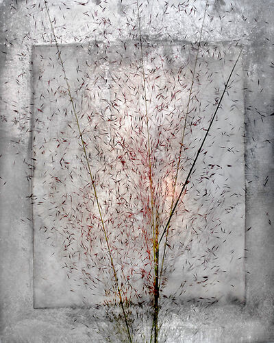Alida Fish, 'Seed Burst 3', 2017