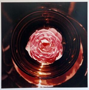 Peter C. Jones, 'Scepter'd Isle Rose Large Format Flower Photo 24X20 Color Photograph Beach House', 2000-2009