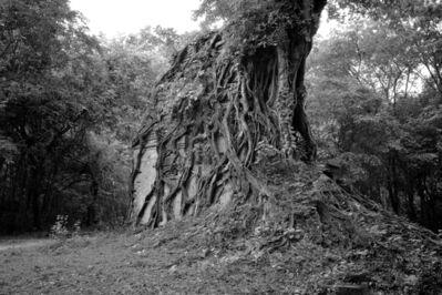 William Frej, 'Prasat Yeai Poeun, Cambodia', 2016