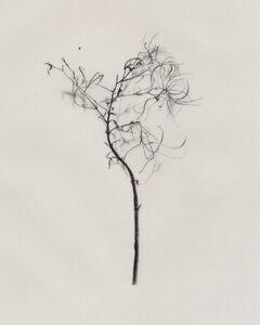 Miriam de Búrca, 'Willow Herb', 2011