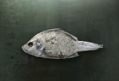 Brad Wilson, 'Salton Sea Fish #1, Santa Fe, NM', 2010