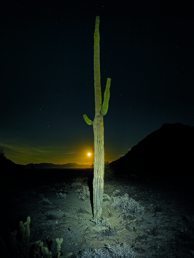 Mark Klett, 'Saguaro Lit by Headlamp with Moon', 2016