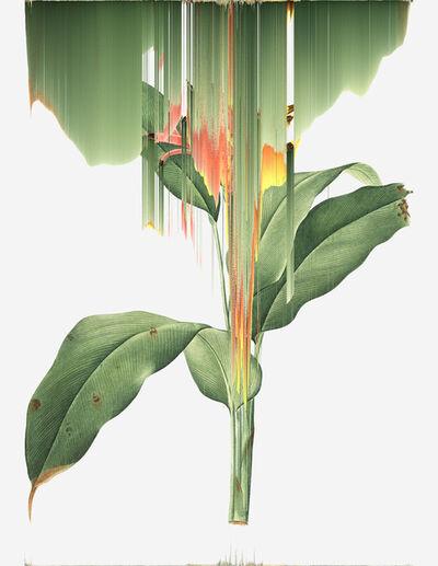 Andrea Wolf, 'Heliconia Psittacorum, var. 018', 2020