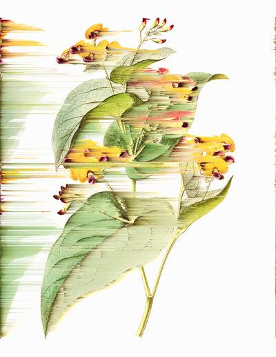 Andrea Wolf, 'Phalaenopsis Chibae, var. 028', 2020