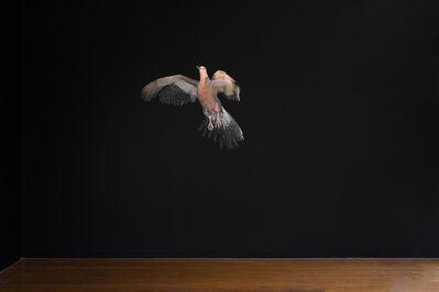 Mikala Dwyer, 'Pigeon', 2021