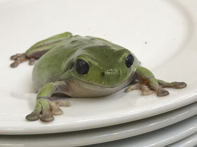 Juergen Teller, 'Frogs and Plates No.1', 2016