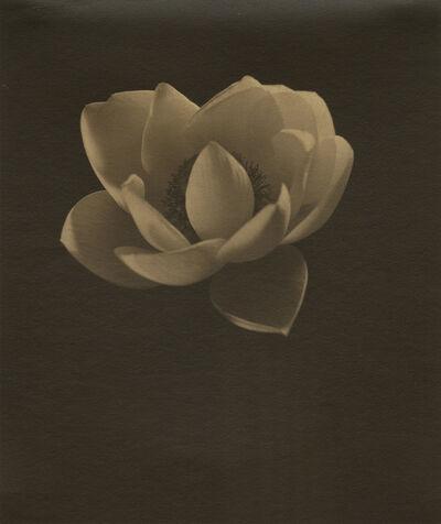 Edward Steichen, 'Lotus', ca. 1915