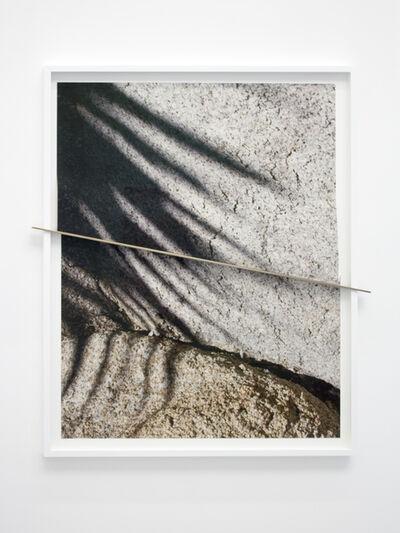 Letha Wilson, 'Joshua Tree Bronze Push (Shadows Half Split)', 2016
