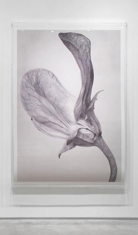 Linarejos Moreno, 'Art Forms in Mechanism XX', 2016