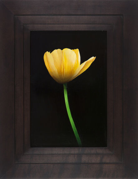 Michael Gregory, 'Untitled (tulip)', 2014